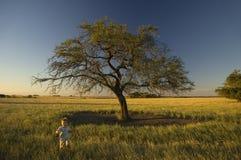 Junge, der in das feenhafte Feld läuft Stockfoto