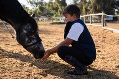 Junge, der das Pferd in der Ranch einzieht lizenzfreie stockbilder