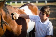 Junge, der das Pferd in der Ranch pflegt stockfotografie