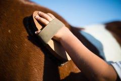 Junge, der das Pferd in der Ranch pflegt lizenzfreies stockfoto