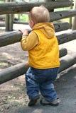 Junge, der durch hölzernen Zaun schaut lizenzfreie stockfotos
