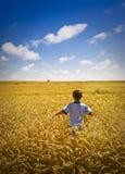 Junge, der durch Weizen-Feld geht Stockfotografie
