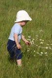 Junge, der ein Gänseblümchen auswählt Lizenzfreie Stockfotos