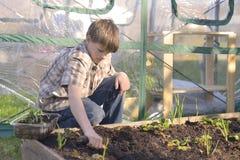 Junge, der in einem Garten arbeitet Stockfotos