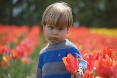 Junge, der in einem Tulpenfeld, die Kamera betrachtend schmollt Stockfotos