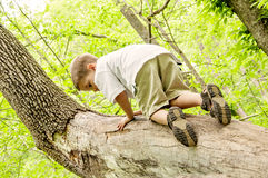 Junge, der einen Baum klettert Stockfotografie