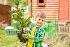 Junge, der einen Baumsämling in den Händen hält lizenzfreies stockfoto