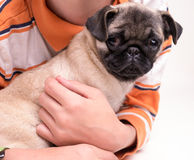 Junge, der einen Pug-Welpen-Hund anhält Lizenzfreie Stockfotografie