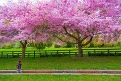 Junge, der hinter die vor kurzem geblühten Blüten läuft lizenzfreies stockfoto