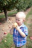 Junge, der im Obstgarten isst Lizenzfreie Stockfotografie