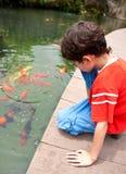 Junge, der japanische koi Fische im tropischen Teich speist Stockfotos