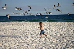 Junge, der in Menge des Vogels läuft Lizenzfreie Stockbilder