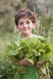 Junge, der organischen Kopfsalat anhält Stockbilder