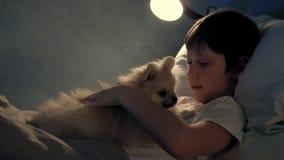 Junge, der in seinem Bett am Abend stillsteht und mit seinem Hund spielt stock video footage