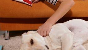 Junge, der seinen Labrador-Hund streichelt stock video footage