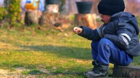 Junge, der Steine im Hinterhof sitzt und wirft stock footage