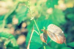 Junge des Grüns und des Brauns verlassen in der Waldfrühlingsnatur zurück Lizenzfreies Stockfoto