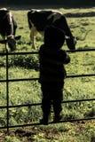 Junge des kleinen Landes Stockfotos