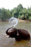Junge, die Elefanten baden. Stockbilder