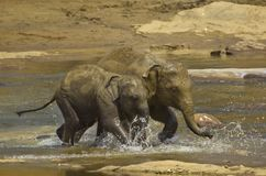 Junge Elefanten Stockfoto