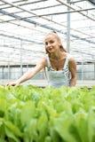 Junge erwachsene Frau, die in einem Gewächshaus im Garten arbeitet Stockfotografie