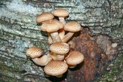 Junge essbare Pilze Stockfotos
