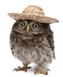 Junge Eule, die einen Hut trägt lizenzfreie stockfotos