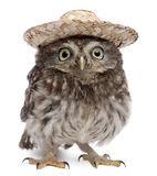 Junge Eule, die einen Hut trägt lizenzfreie stockfotografie