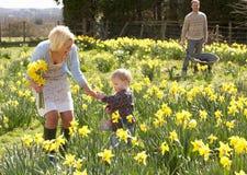 Junge Familie, die unter Frühlings-Narzissen geht Lizenzfreie Stockfotos