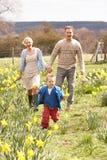 Junge Familie, die unter Frühlings-Narzissen geht Stockfotografie