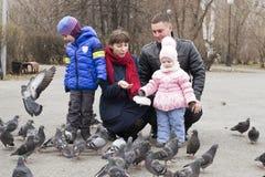 Junge Familie mit Kindern ziehen Tauben im Park ein Stockbilder