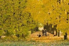 Junge Familien nehmen Spaziergang im Herbstpark Stockfotos