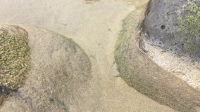 Junge Fische in einer Strandpfütze stock video footage