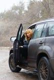 Junge Frau öffnete ihre Autotür und zurück schauen Stockfotografie