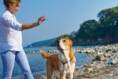 Junge Frau bildet ihren Hund auf dem Strand aus Stockfotos