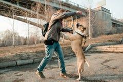 Junge Frau bildet ihren Hund im Abendpark aus stockfotografie