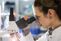 Junge Frau des Wissenschaftlers, die ein Mikroskop in einer Wissenschaft verwendet Lizenzfreies Stockbild