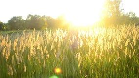 Junge Frau, die auf dem Feld mit einem hohen trockenen Gras läuft stock footage