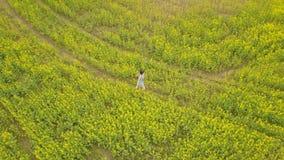 Junge Frau, die auf einem Blumengebiet geht Gelbe Blumen des Sommers auf einem Gebiet stock footage