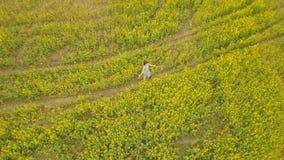 Junge Frau, die auf einem Blumengebiet geht Gelbe Blumen des Sommers auf einem Gebiet stockfoto