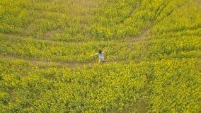Junge Frau, die auf einem Blumengebiet geht Gelbe Blumen des Sommers auf einem Gebiet lizenzfreies stockbild