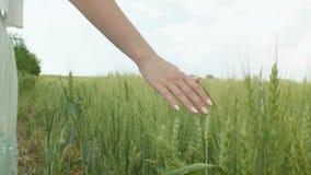 Junge Frau, die auf einem Gebiet von Weizen- und Gerstenohren, ein Ohren mit ihrer Hand berührendes und genießendes Mädchen, das  stock footage