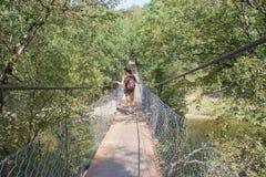 Junge Frau, die auf Hängebrücke über Fluss geht stockbild