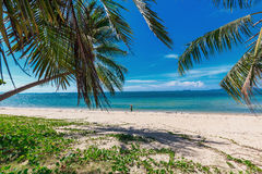 Junge Frau, die auf schönen tropischen Strand mit Palmen geht Lizenzfreie Stockfotos