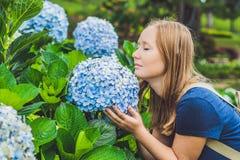 Junge Frau, die den Geruch der Hortensie genießt Mädchen, das nahe a stillsteht lizenzfreie stockfotografie