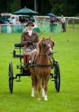 Junge Frau, die ein Pferd und einen Wagen antreibt lizenzfreies stockfoto