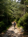 Junge Frau, die in einem Wald wandert lizenzfreie stockfotografie