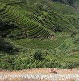 Junge Frau, die entlang chinesisches Reisfeld läuft Lizenzfreie Stockfotografie