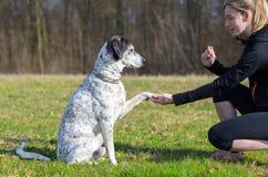 Junge Frau, die ihren Hund unterrichtet, seine Tatze darzustellen lizenzfreie stockfotografie