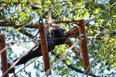 Junge Frau, die im Abenteuerseilpark klettert Stockfotografie